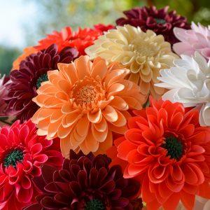 Papierové kytice a kvety