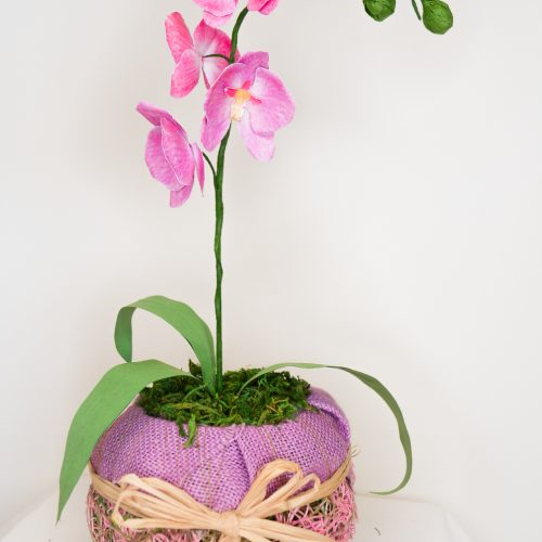 orchid10